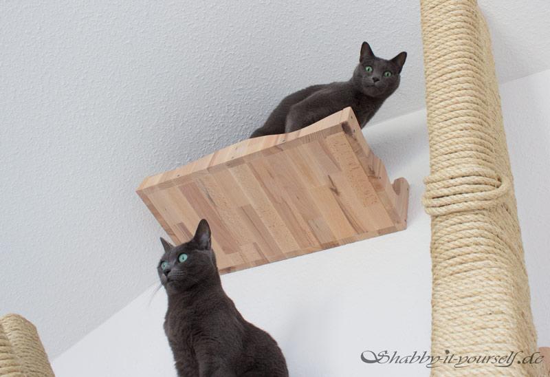 Katzen Kratzbaum Kletterwand 22